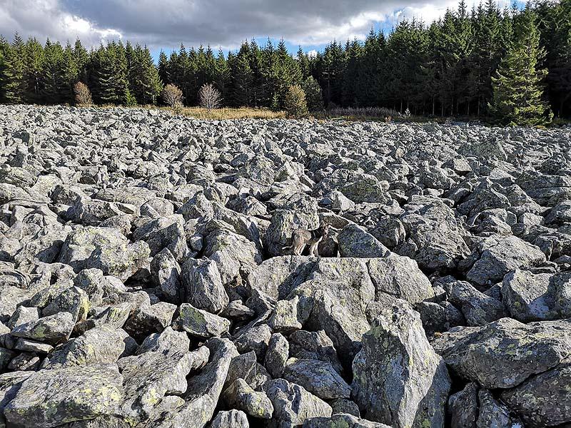Rivières de pierre sous le suc de la Lauzière